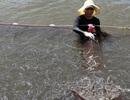 Bộ Nông nghiệp hướng dẫn cách nuôi trồng thủy sản tại vùng biển ô nhiễm