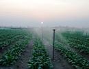 Hà Tĩnh: Áp dụng kỹ thuật tưới thông minh vào sản xuất rau màu