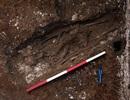 Phát hiện 3 bộ xương người Việt cổ có niên đại khoảng 5.000 năm