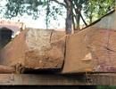 Bắt lượng gỗ lớn khai thác trái phép