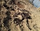Phát hiện xác voi rừng đang phân hủy bên đầm lầy