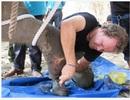 Tổ chức Động vật Châu Á tài trợ 50.000 USD giúp tỉnh Đắk Lắk bảo tồn voi