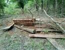 Xét xử 25 đối tượng trong một vụ phá rừng