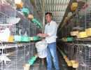 Kiếm trăm triệu mỗi năm từ nuôi bồ câu Pháp, gà đồi