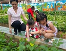 Tinh khiết vườn rau sạch trong trường mầm non cho trẻ ăn an toàn