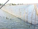 Toàn bộ hệ đầm phá chưa bị ảnh hưởng bởi sự cố môi trường biển
