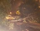 Mưa lớn, gió mạnh, cây đổ la liệt tại Huế
