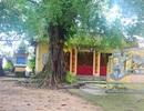 Bao cao su vương vãi ở đình làng trăm năm tuổi