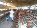 Chi hơn 4 tỷ USD để nhập nguyên liệu, thức ăn chăn nuôi