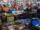 Gần 140 mẫu hải sản ở các tỉnh miền Trung có kết quả an toàn