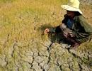 Đề nghị xóa nợ, khoanh nợ cho nông dân gánh chịu thảm họa