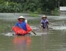 17 hộ dân bị cô lập hoàn toàn trong nước lũ