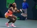 """Gieo sầu"" cho Halep, Serena Williams vào chung kết"