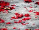 Xác pháo vẫn đỏ ở nhiều nơi trong dịp Tết