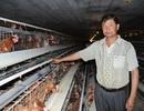 Thu lãi 3 tỷ mỗi năm từ nuôi gà theo công nghệ khép kín
