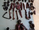Voọc chà vá chân đen bị sát hại hàng loạt
