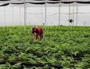 Từ công nhân trở thành triệu phú kiểng lá