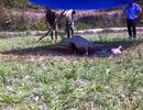 Bàng hoàng phát hiện thi thể cháy đen ở bãi đất hoang