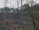 Vô tư đốt, phá rừng ngay cạnh biển cấm