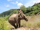 Con voi nhà cuối cùng của vùng đất Bắc Tây Nguyên