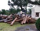 20 đối tượng liều lĩnh cướp gỗ khi bị cơ quan chức năng bắt giữ