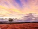 Đẹp ngỡ ngàng mùa cỏ hồng trên Cao nguyên