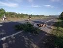 Tạm giữ một tài xế nghi tông chết 2 người rồi bỏ trốn