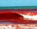 """""""Thủy triều đỏ"""" vào đề thi môn Sinh học"""