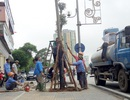 Hà Nội: Cán bộ sang Trung Quốc học kỹ thuật trồng cây xanh