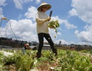 Nông dân đói vốn, doanh nghiệp nhỏ bế tắc