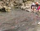 Chấn chỉnh tình trạng lộn xộn tại Khu du lịch suối cá thần