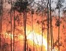 Thanh Hoá di dân khẩn cấp, trắng đêm chữa cháy rừng