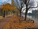 Nhìn những mùa thu đi