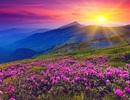 """Lạc bước tới """"thiên đường hoa"""" trong dãy Himalaya"""