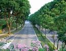 """Lý Quang Diệu và những quyết sách đưa Singapore trở thành """"quốc đảo xanh"""""""