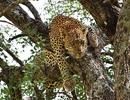 Về với thiên đường hoang dã ở Kenya