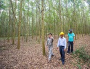 Khi nông dân Việt ra nước ngoài dạy trồng cây