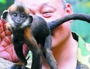 Dùng lưỡi để cứu mạng khỉ con