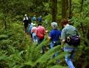 Kinh nghiệm cần thiết khi đi du lịch rừng