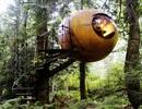 """Độc đáo khu nghỉ dưỡng với những """"quả cầu treo"""" giữa rừng"""
