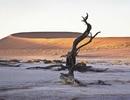 Deadvlei - Nghĩa địa cây khô giữa lòng sa mạc