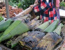 Lên Điện Biên thưởng thức đặc sản rêu đá của người Thái