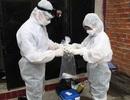 Chống dịch cúm A/H5N1: Bảo hộ người nuôi hơn giết yến