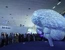 Khám phá cấu trúc kỳ diệu của bộ não qua trực quan sinh động