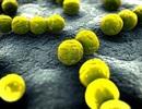 Cảnh giác với những vi khuẩn sống lâu trên cũi, đồ chơi và sách