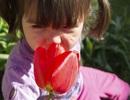 Mũi phản ứng nhanh hơn mắt và tai nhiều lần