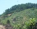 Dân ồ ạt lên núi... chiếm đất rừng