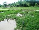 Sợ nghĩa trang sình lầy, dân mua đất rừng xây mồ mả