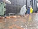 Dùng xe điện, lót gạch để đưa du khách qua nơi ngập lụt