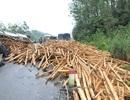 """Xe tải """"rải"""" gỗ tràm kín đường, giao thông ùn tắc"""